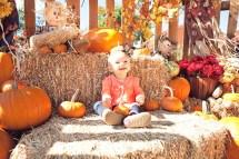 Pumpkin Patch Lakeway